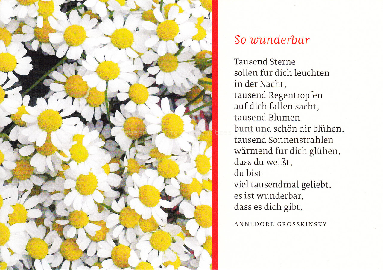 Textkarte 2205 - Margeritenmeer